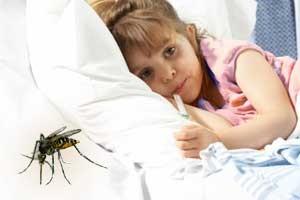 dengue-fever